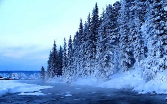 коллекция, winter, лес, мелодии, зимы, хитрый, зимой, звучат,