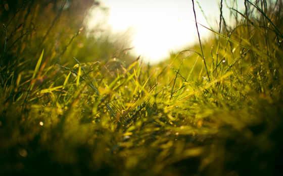 весна, трава, весны, природа, яndex, конец, pinterest,
