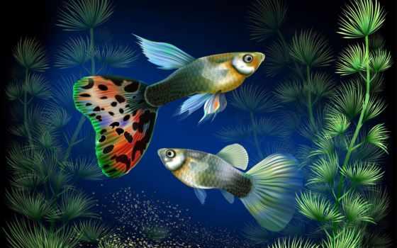 аквариум, рыбки, drone, мини, jjrc, selfie, free, fpv,