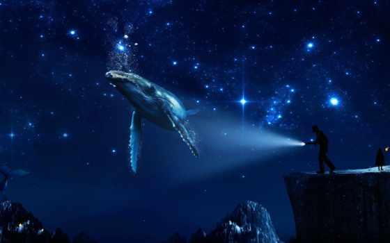 кит, убийца, star, космос, ultra, brady, orca, animal, dream, life
