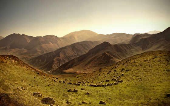 енот, овцы, горы