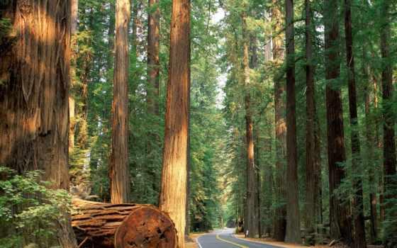 лес, дорога, дороги