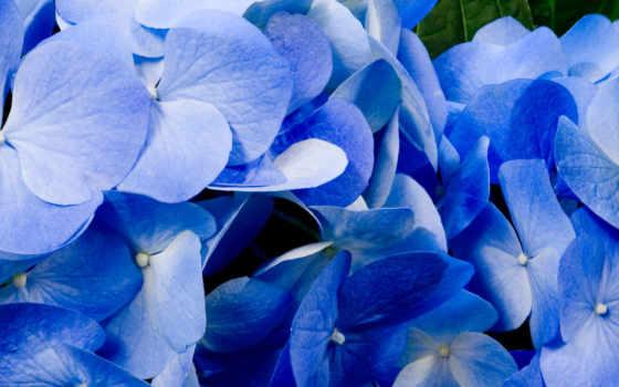 cvety, цветов, priroda, растения, vesna, голубого, широкоформатные,