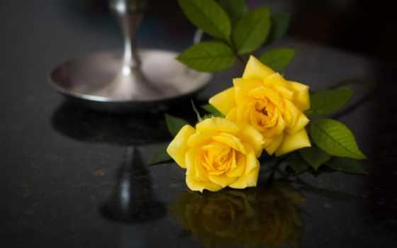 розы, теме, макро, бутоны, душі, желтые, широкоформатные, фотографий,
