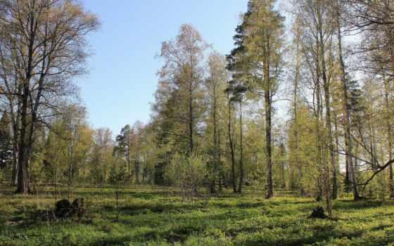 весна, лес, природа, весной, лесу, warren, сам, shawn,