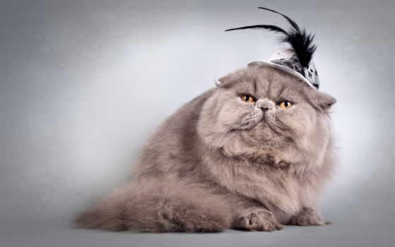кот, кошку, пушистая, везде, голове, причин, очень, how, better, жены,