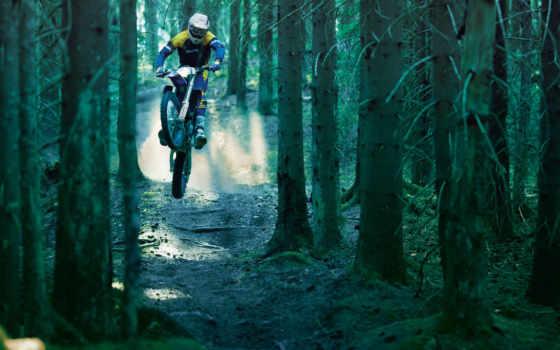 прыжок, лес