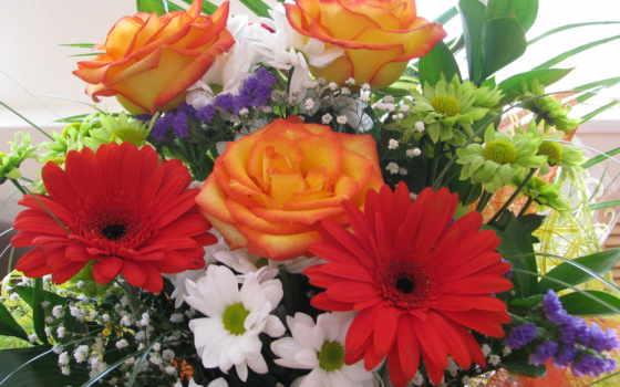 цветы, герберы, букеты