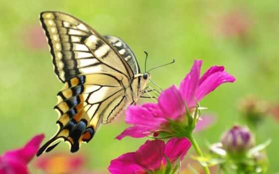 макро, бабочка, красивая, высоком, желтая, рисунки, красочная,