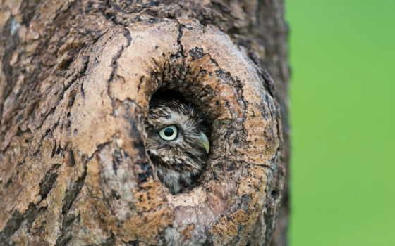 ложбинка, сова, дерево