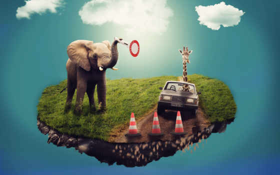 elephants, слон, cars, colorful, выгул, free,