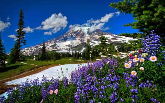 цветы, горы, природа, снег, дорога, landscape, fone, гор,