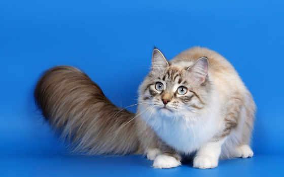 коты, кошки, широкоформатные, красивые, заставки, котов, кот, качественные, animal,