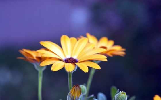 cvety, high, качество, хороший, макро, хорошего, красавица, качества,