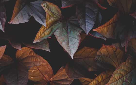 листва, чая, растение,