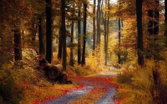 лес, autumn, ноябре, forests,