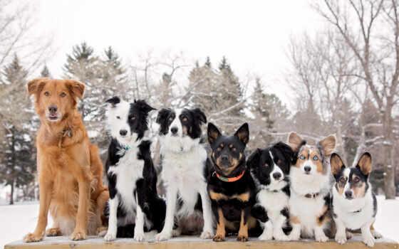 друзья, собаки, things