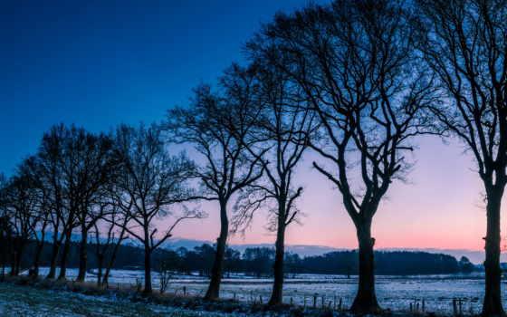 winter, норвегия, деревья