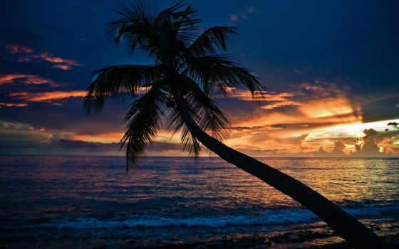 palm, закат, пляж, море,