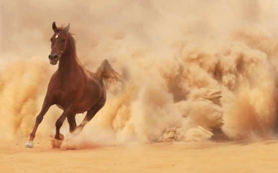 arabian, лошадь, images, horses, running, картины, out,
