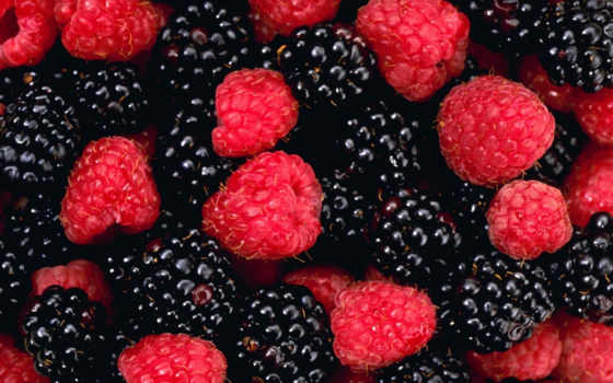 ягоды, blackberries, fruits, плод, berries, search,