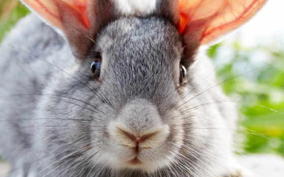 coelho, coelhos, pinterest, parede, papel, filhotes, animais, google, pesquisa,