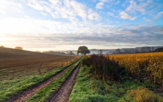 поле, дорога