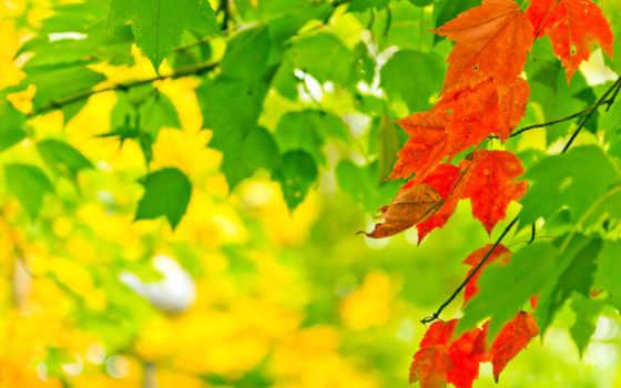 osen, priroda, листья Фон № 61485 разрешение 2560x1600