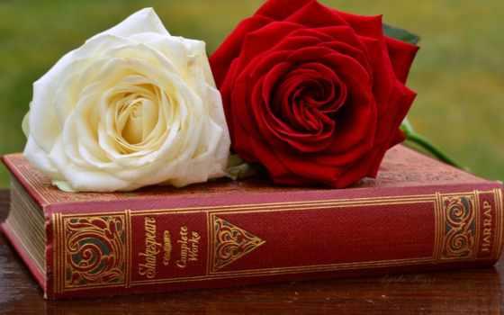 розы, cvety, фэнтези
