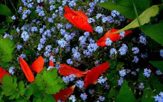 Цветы 103137