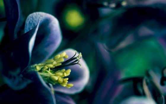 лепестки, весна, цветы