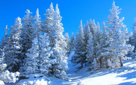 winter, her, мяч, окончен, уходит, imagini, fundal, iarnă, февр, нам, id,