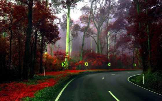 природа, поворот, дорога, заставки, крутой, знаки, категории, широкоформатные, осень, trees, арборетум,