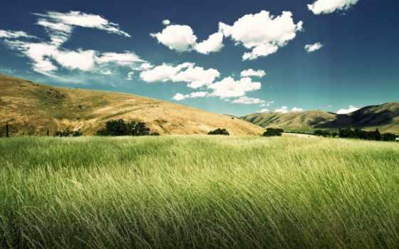 поле, красивые, трава, зелёная, природа, небо, margin, fone, oblaka, тучи, колосья,