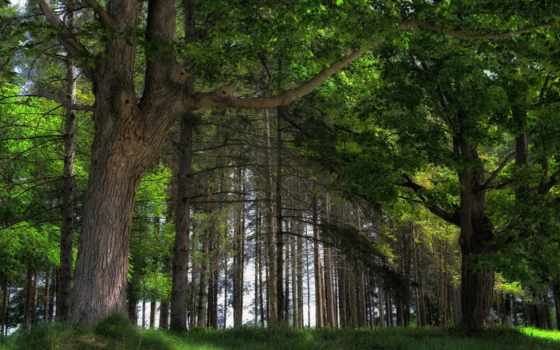 яndex, коллекцию, посмотрите, коллекциях, лес,