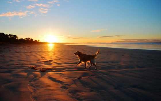 море, собака, закат