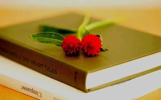 книга, цветы, книги