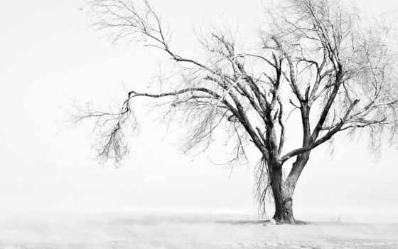 дерево, dry, одинокое,