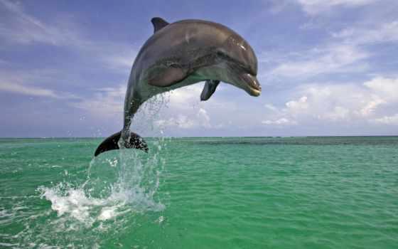 дельфины, моря,