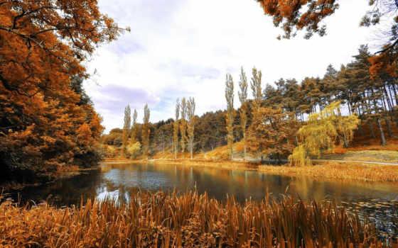 природа, park, phoenix, landscape, дублин, осень,