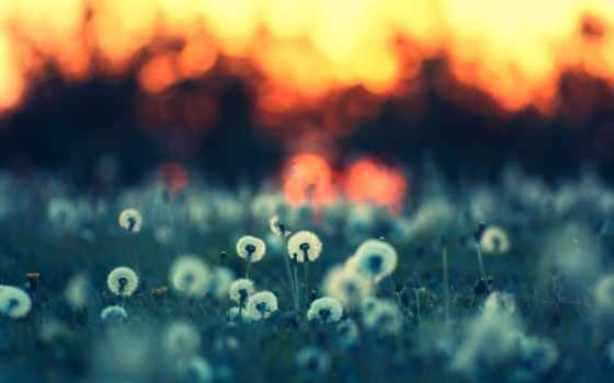 summer, природа, поляна