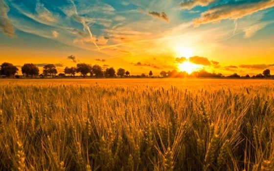 поле, русское, хлебное, полюшко, телефон,