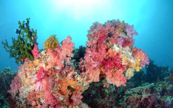 world, underwater, рыбки