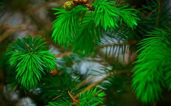 виа, pinterest, gif, christmas, об, pine, иголки, хвоя,