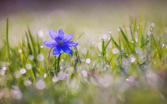 всяко, цветы, depression, flowers, essences, roses,