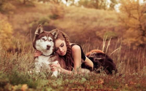 собака, девушка, хаска