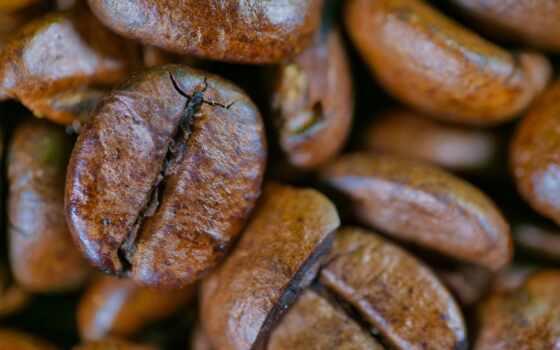 колба, coffee, фото, vacuum, insulate, качество, bean, community, листь, job, have