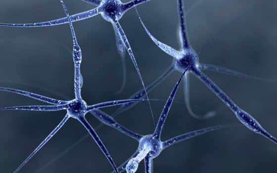 нейроны, клетки