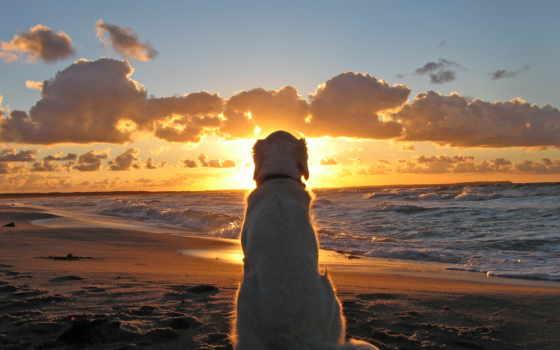 берегу, моря, закат, смотрит, солнца, собака, сидит, море,
