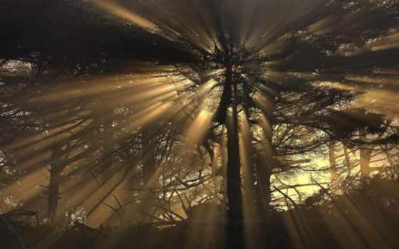 свет, красивые, пейзажи -, rays, совершенно, абстрактные, дерево, природа, rewalls,